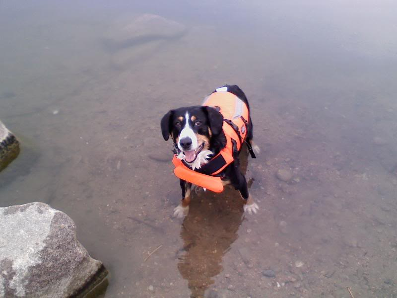 Loki the Submarine Lokiswim12