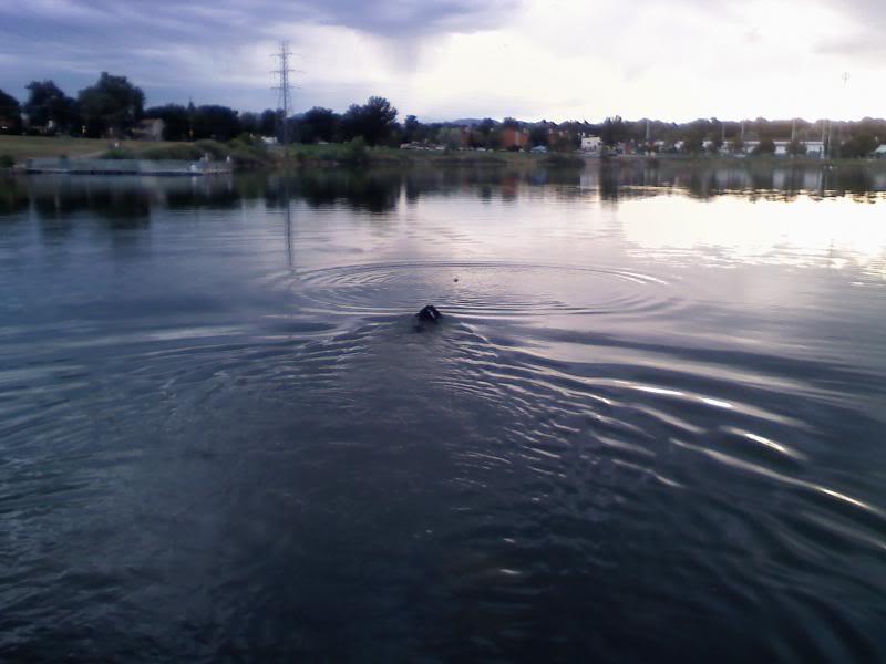 Loki the Submarine Lokiswim3