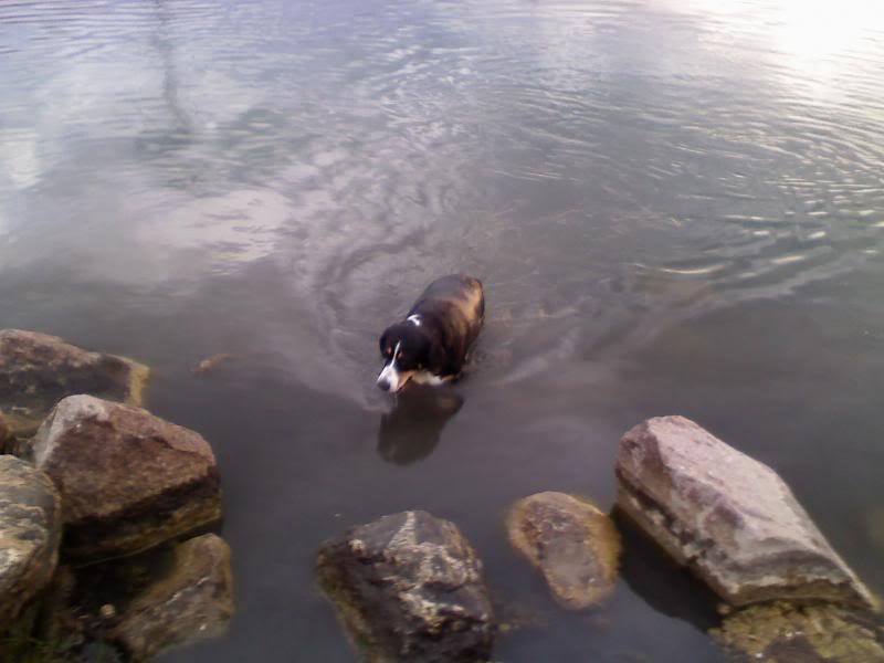 Loki the Submarine Lokiswim4