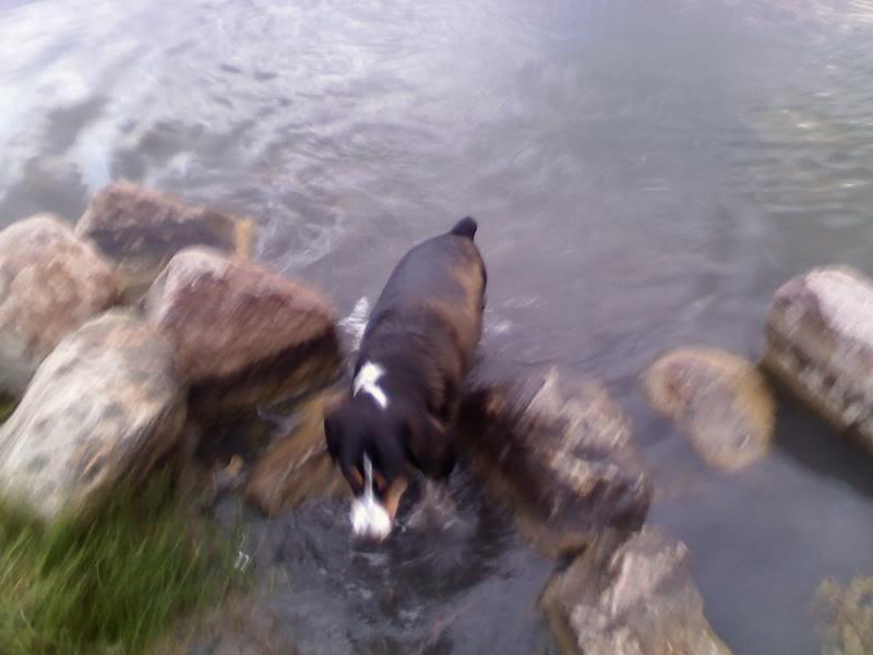 Loki the Submarine Lokiswim5