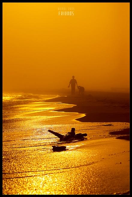 Volim zlatno Gold_13