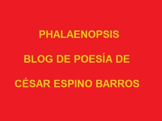 Phalaenopsis, blog de poesía 100_0134