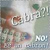 Cindee's~ s t u f f  :D Cabra
