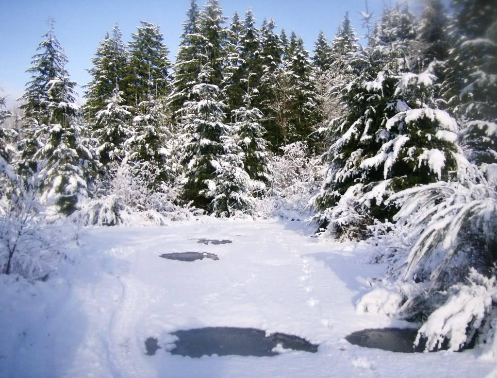 Post your 2011- 2012 snow pics. HPIM1981