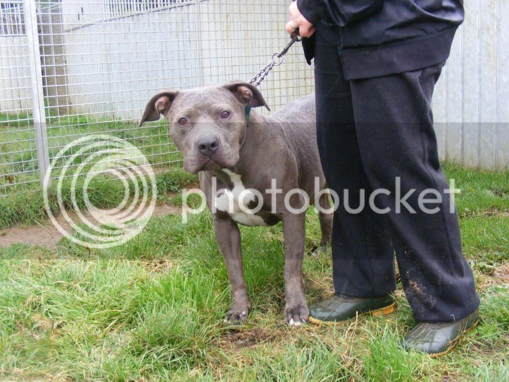 Lola - HOMED DSCF4128