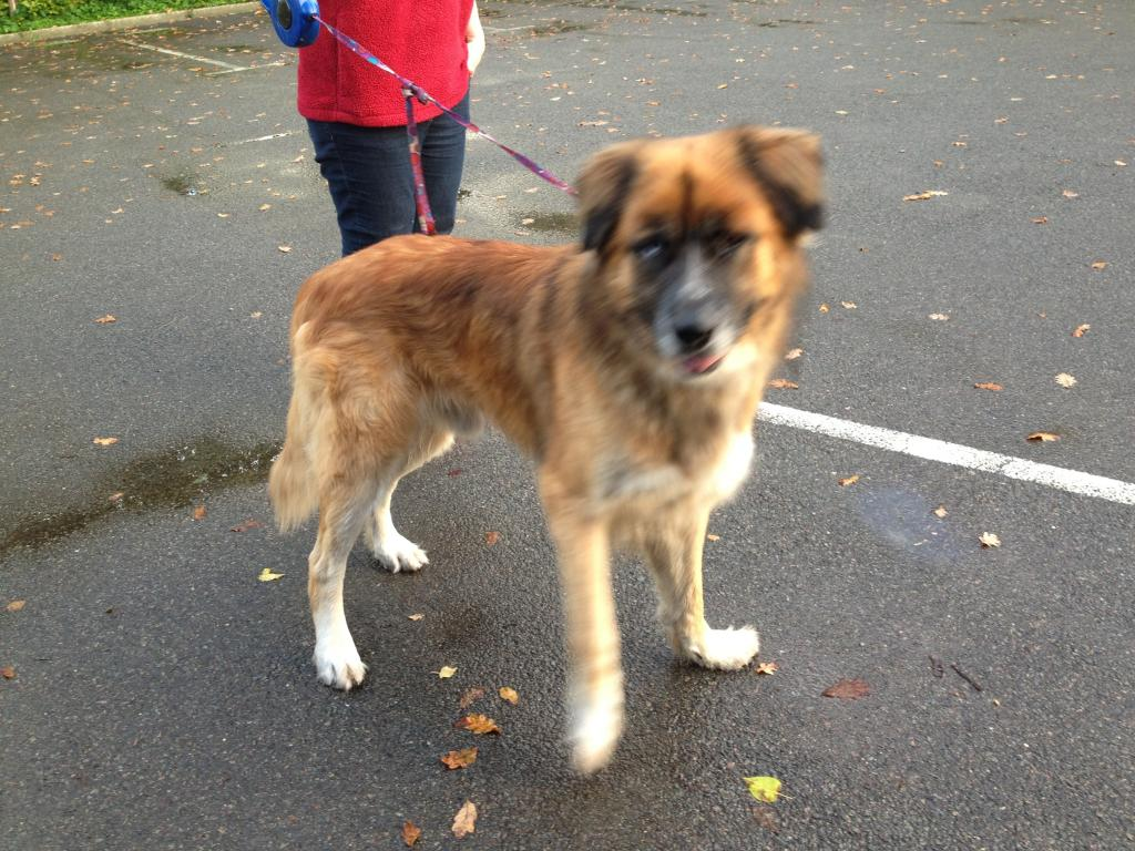 Hector - HOMED Zpfile000-1