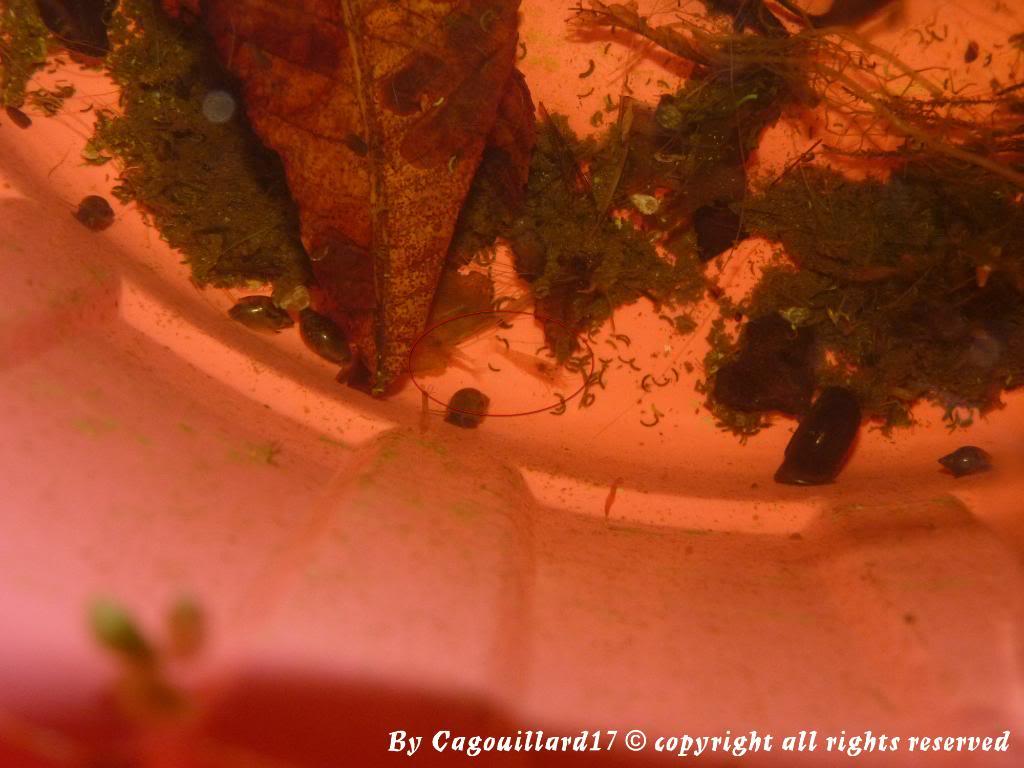 Qui a dit que les crevettes aimées pas le froid P1010693