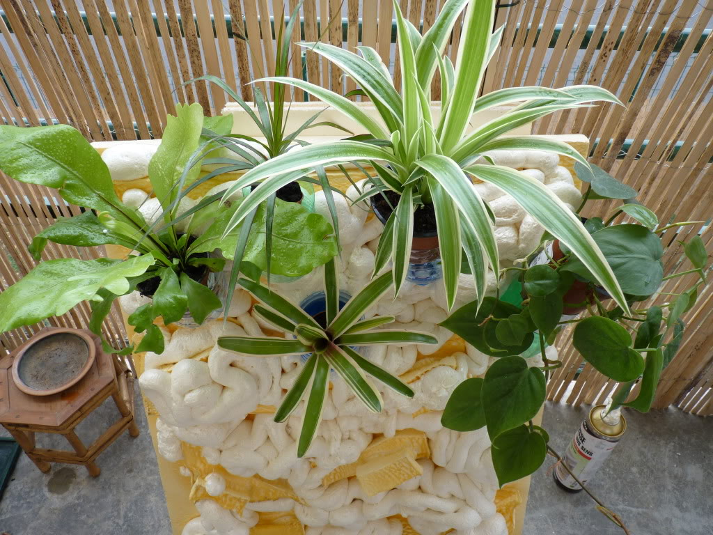 [résolu]Projet en cours mur végétal et décor de fond d'aquarium P1050407