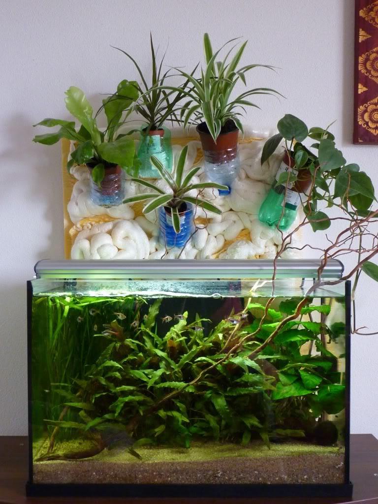 [résolu]Projet en cours mur végétal et décor de fond d'aquarium P1050422