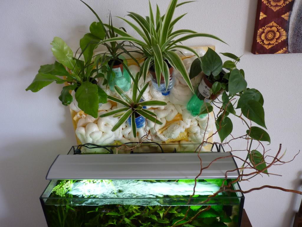 [résolu]Projet en cours mur végétal et décor de fond d'aquarium P1050429