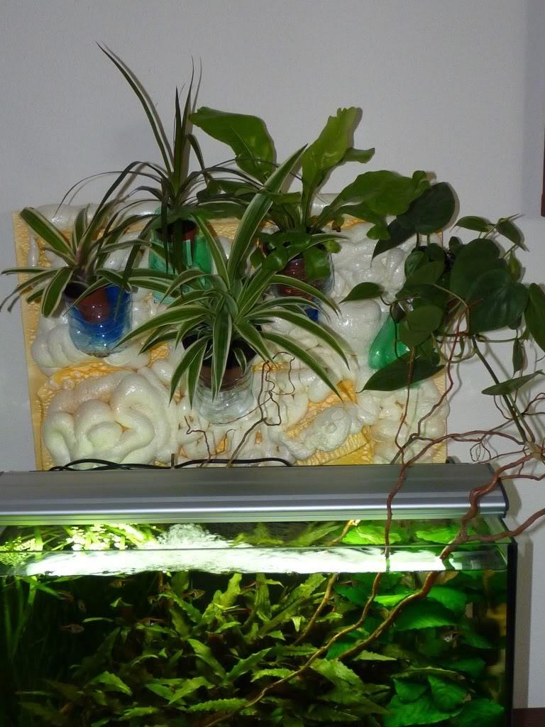 [résolu]Projet en cours mur végétal et décor de fond d'aquarium P1050434