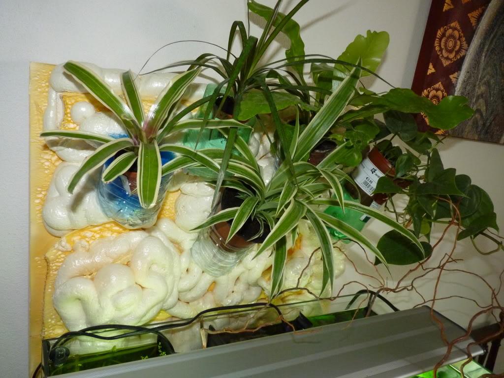 [résolu]Projet en cours mur végétal et décor de fond d'aquarium P1050437