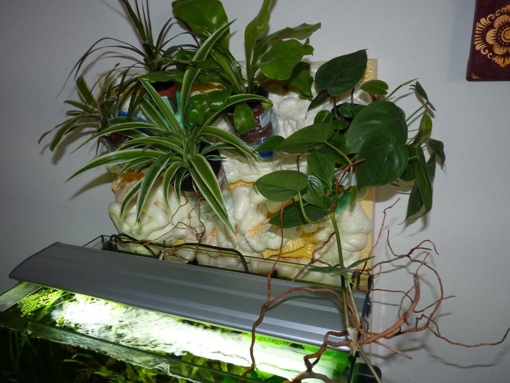 [résolu]Projet en cours mur végétal et décor de fond d'aquarium P1050440