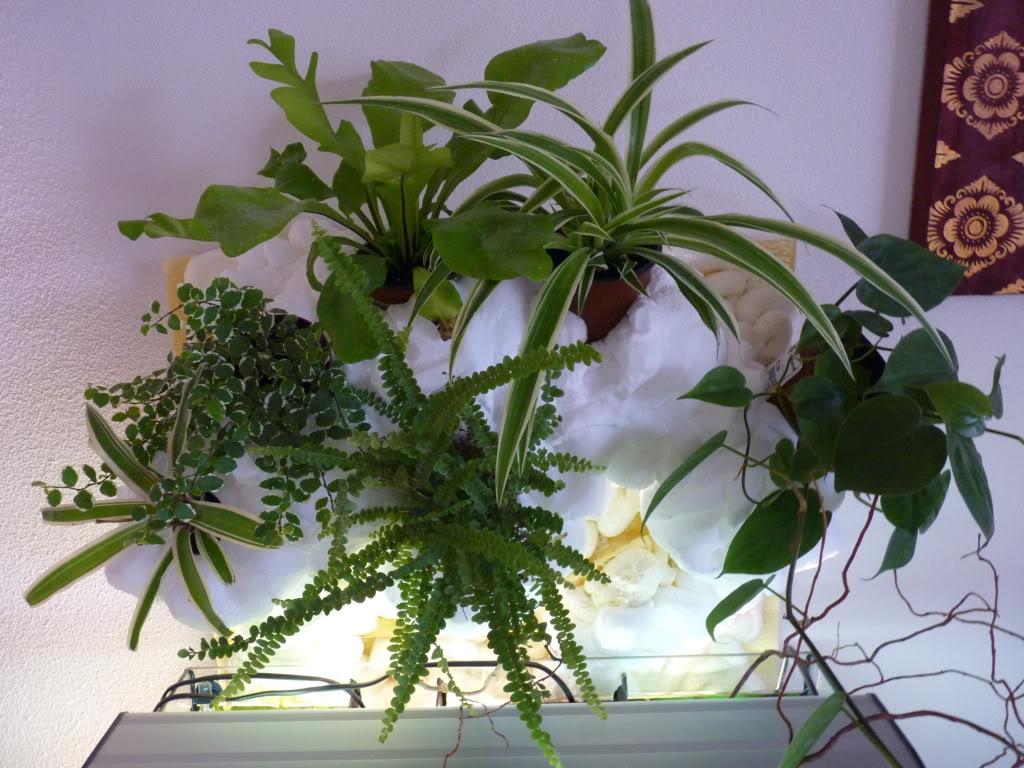 [résolu]Projet en cours mur végétal et décor de fond d'aquarium P1050513
