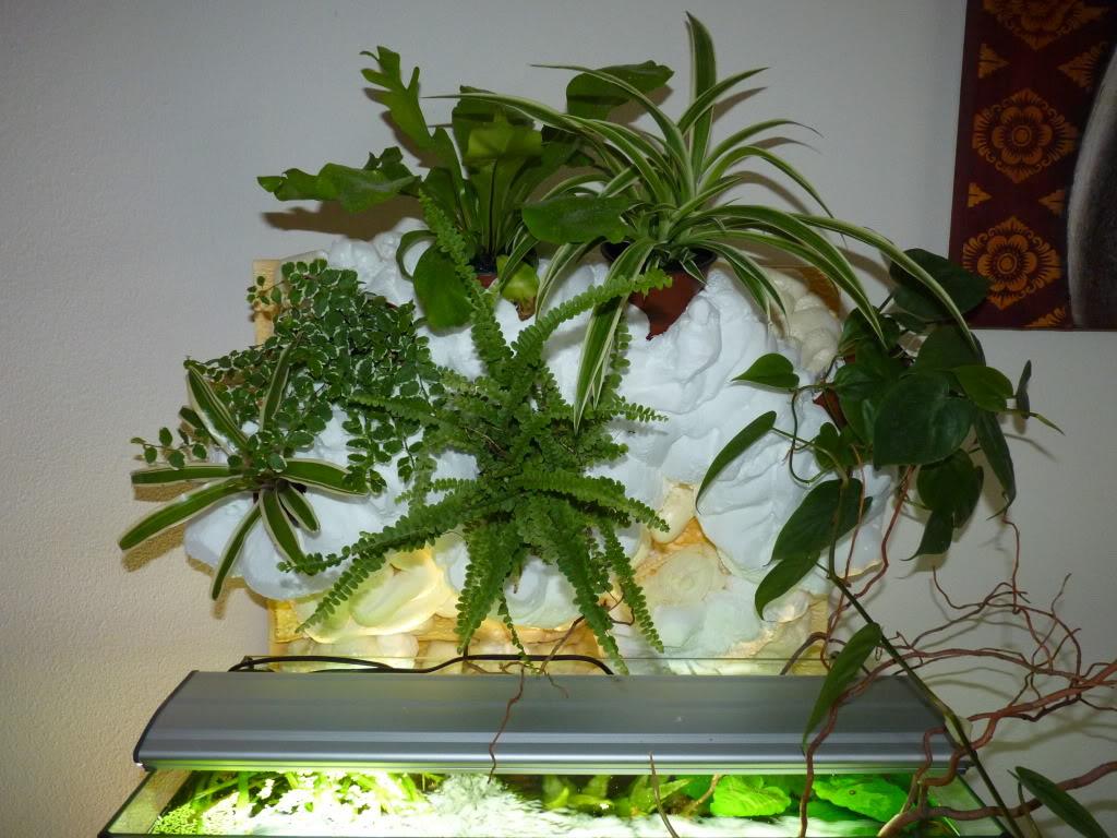 [résolu]Projet en cours mur végétal et décor de fond d'aquarium P1050519