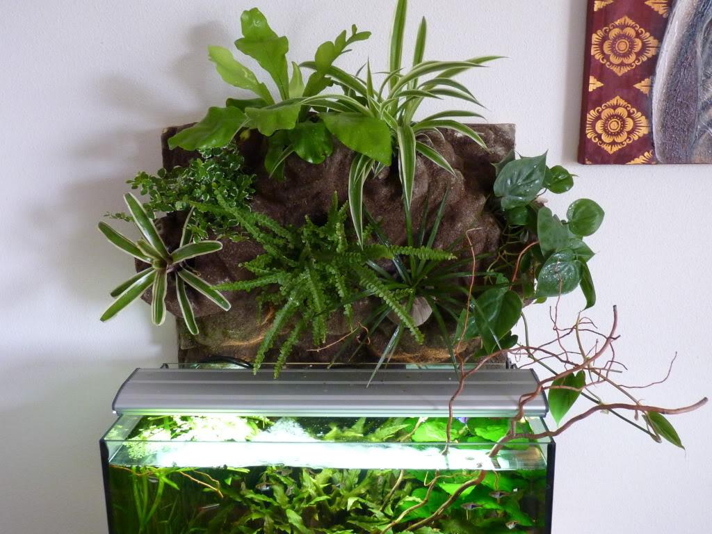 [résolu]Projet en cours mur végétal et décor de fond d'aquarium P1050548