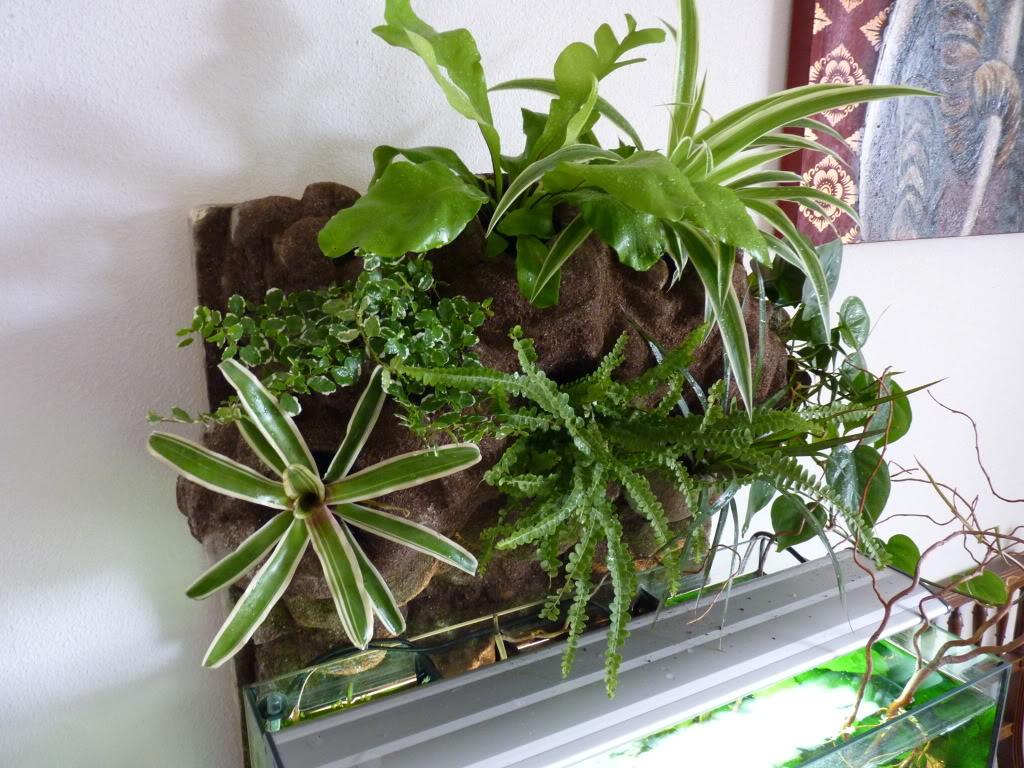 [résolu]Projet en cours mur végétal et décor de fond d'aquarium P1050550