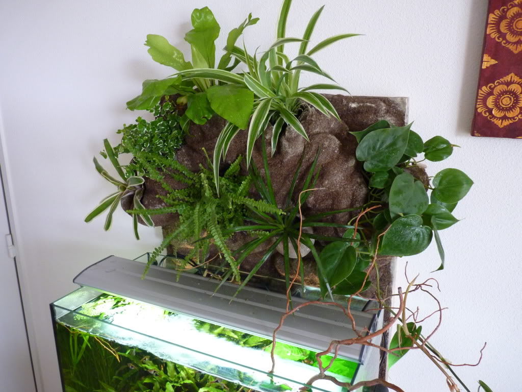 [résolu]Projet en cours mur végétal et décor de fond d'aquarium P1050551