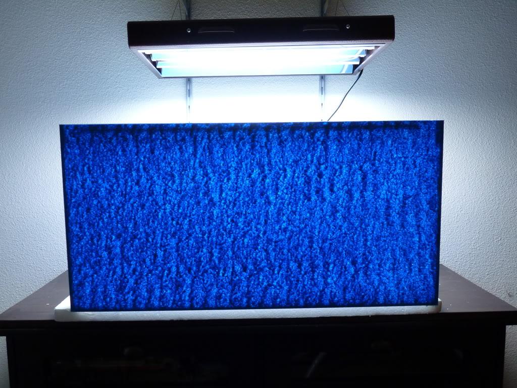Préparation d'un nano récif 116L - Page 3 P1060806