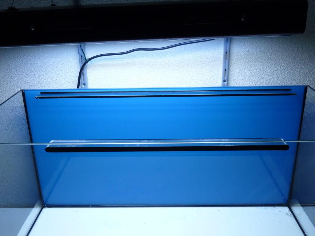 Préparation d'un nano récif 116L - Page 3 P1060830