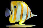 "<font face=""Georgia"" size=""3"">Vos poissons marins </font>"
