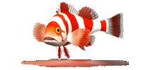 """<font face=""""Georgia"""" size=""""3"""">Atlas sur les poissons marins</font>"""