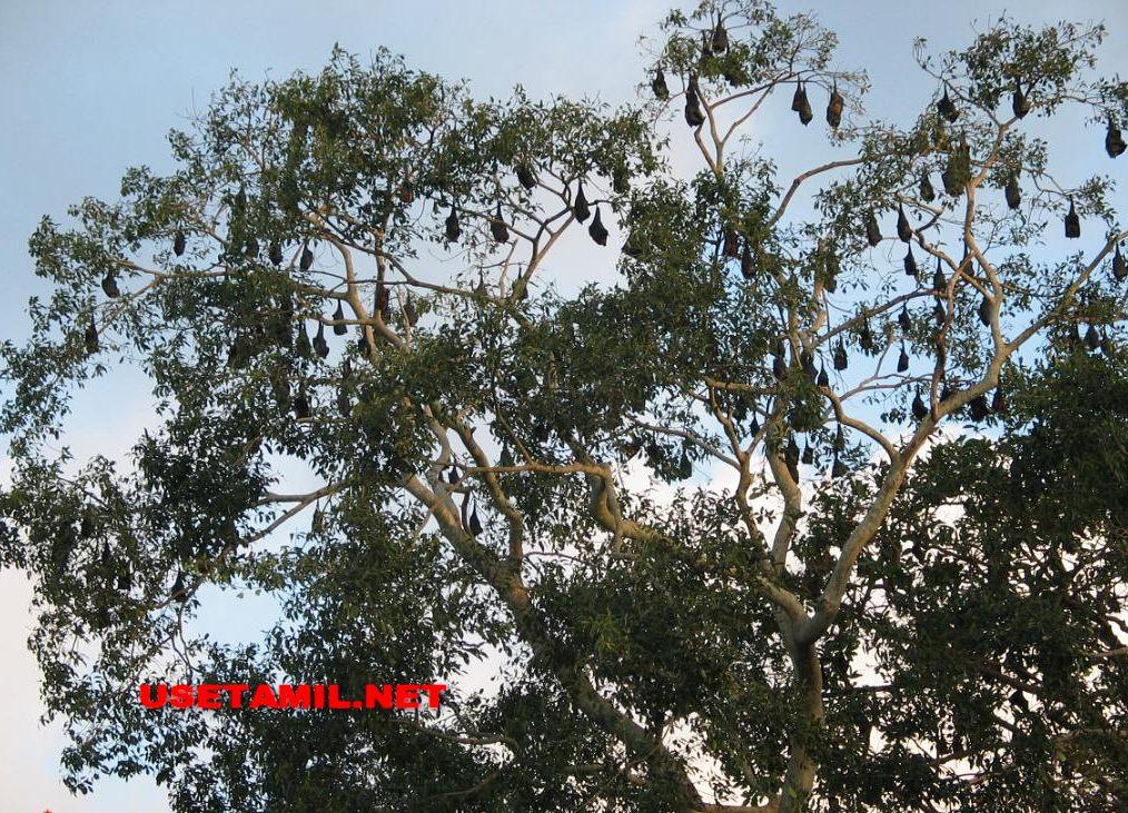 A9 பாதையும் அதை சார்ந்த நினைவுப்பதிவுகளும்  - Page 3 IMG_0080_zpsd410f833