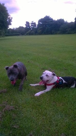 Our lovely Milo enjoying the park 10447049_10152290663147881_910740476449432009_n