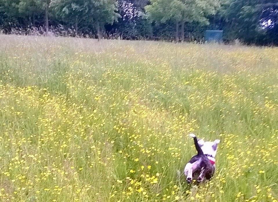 Our lovely Milo enjoying the park RunningFree