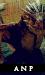 Armonia Nectere Pasus | Elite | Nuevo Boton13