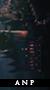 Armonia Nectere Pasus | Elite | Nuevo Boton6