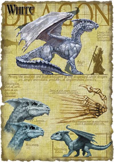 Los Dragones Blancos Dragon-blanco-anatomia-diagrama