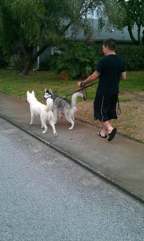 Koda Bear and Luna Walking