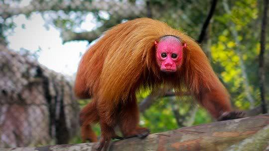 Những động vật quái dị nhất thế giới Anh3