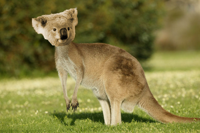 [TELEDOL] Australhasia, un nuevo país Canguroala_zpsootsauaw