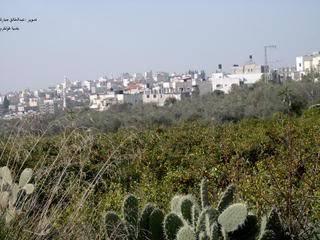 موسوعة صور المدن الفلسطينية Tulkarm-13477