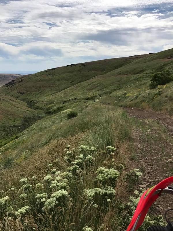 Green dot trails 6-3? Cool_zpsavitwtlz