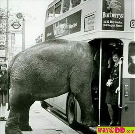 SEM PALAVRAS... Funny-pictures-weird-passenger-D5P