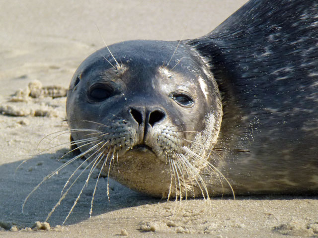Danish Roadtrip Seal-Grenen
