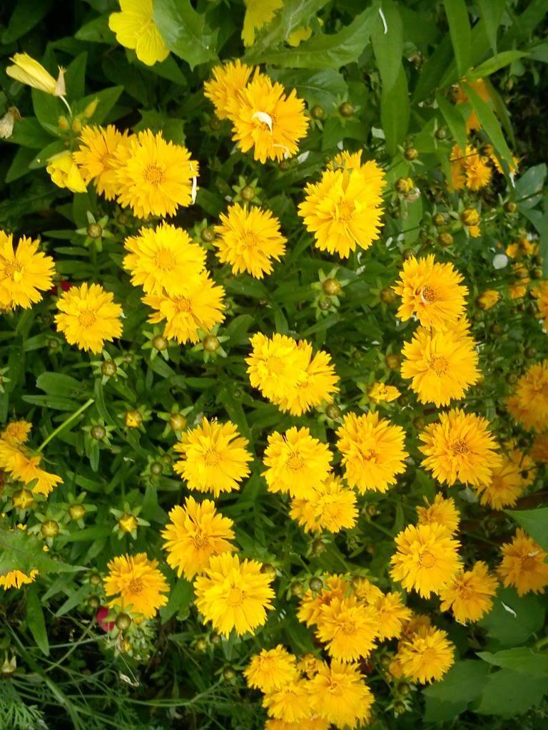 Discutii despre diverse plante DSC00384_zps059605dc