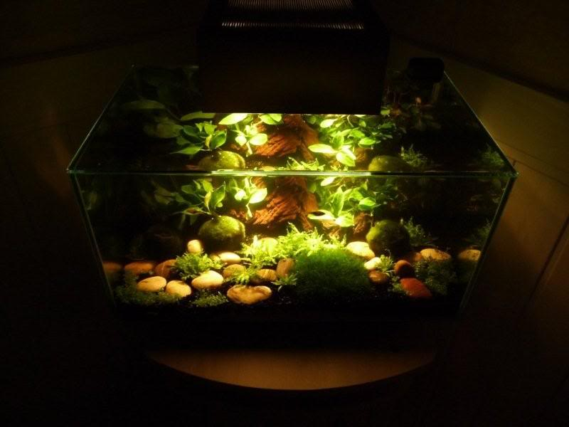 Awesome Mini Jardin Japonais Aquarium Gallery - House Interior ...