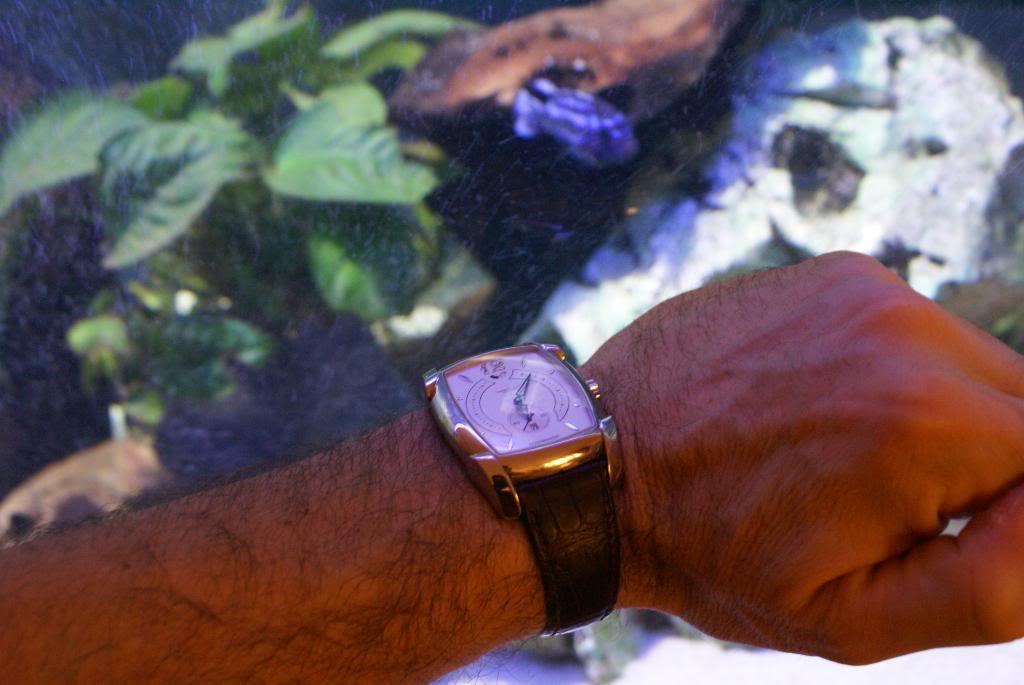 Une non plongeuse en dehors de l'eau ... DSC08005