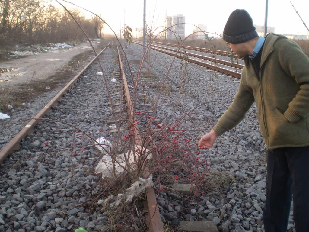 Liniile ferate industriale din Bucuresti P1010612_01