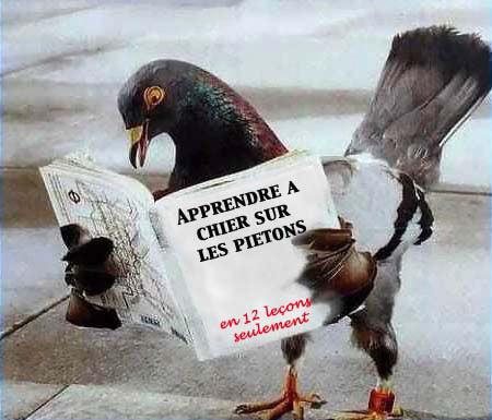 Vos photos amusantes (suite1) - Page 22 Drole-pigeon