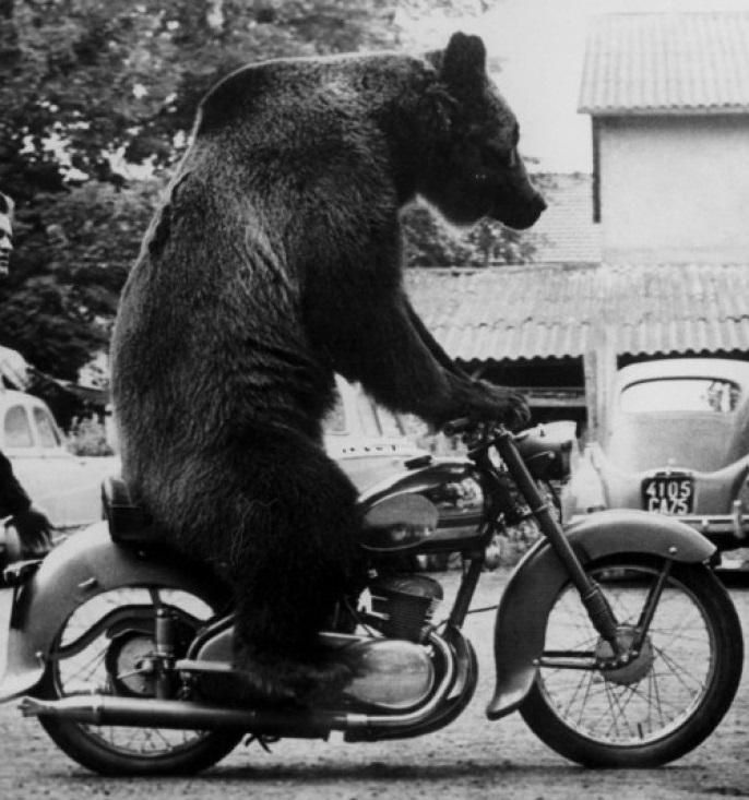 Compra Srad 2013 ou 2014 vs Altura 1,86 Bear-motorbike2_zps3aafa2e7