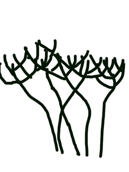 Petit cours sur la taille d'arbuste Arbusteenttedechat