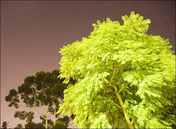 இயற்கை அழகு நிறைந்த காட்சிகள்  - Page 4 000138_Night_Trees