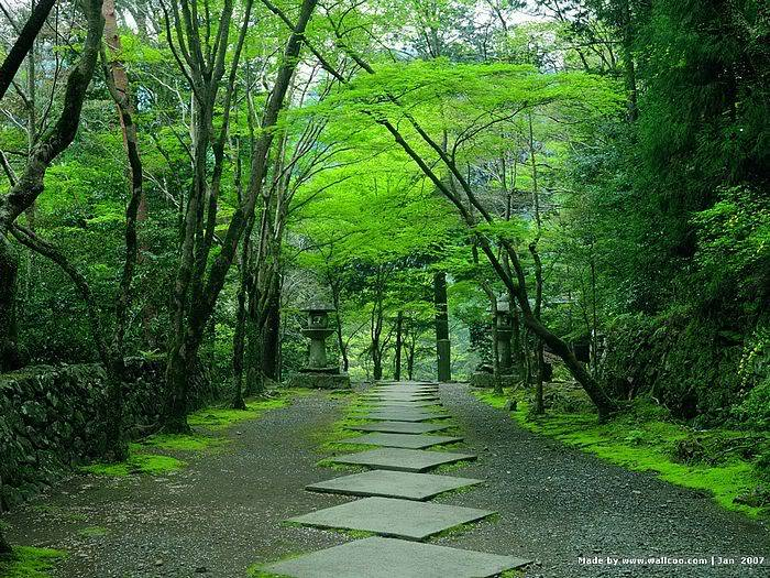 just Japan 5bwallcoo5d_Kyoto_scene_J01_42