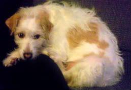 Fotos y videos de nuestros perros. Foto1438-1