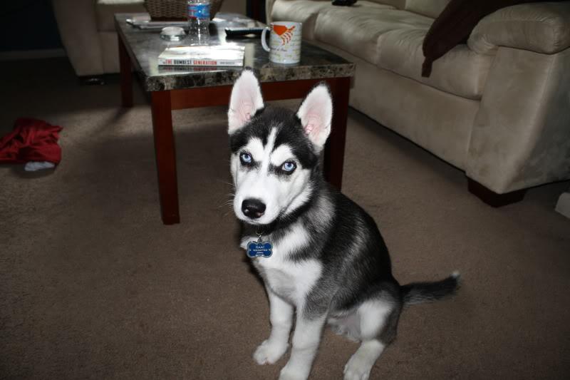Tiko growing up! IMG_3103